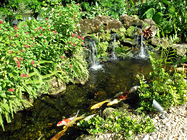 Total landscape concepts koi ponds for Cool koi ponds